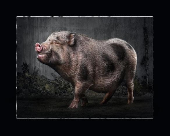 Petrille myönnettiin vuonna 2012 QEP-arvonimi hienosta eläinkuvasarjasta. Tuon kunnianosoituksen on saanut Suomessa vain 13 valokuvaaja.